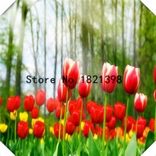 100PCS/bag 9 Kinds Of Tulip Seeds Bonsai Plant For Garden Living Room Air Purification Perennial Japan Flowers Free Shipping