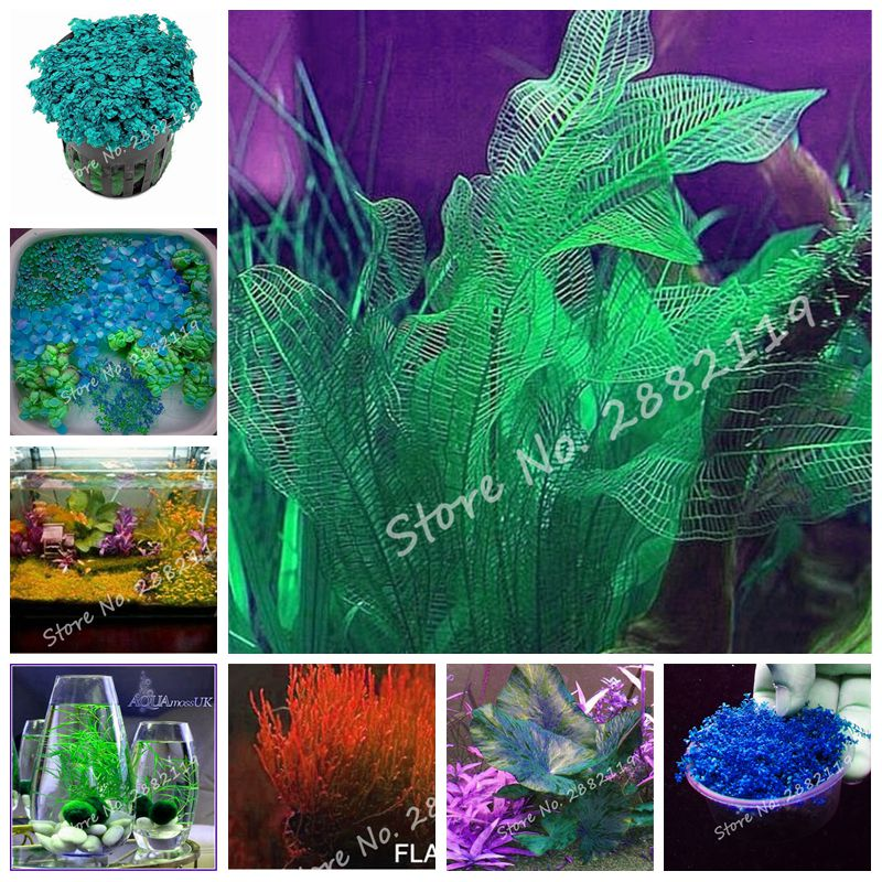 New Arrivals! 300 Pcs/bag Hot Sale Aquarium Plant Seeds Fish Tank Dedicated Water Grass Seed Natural Growth Indoor Beautifying(China (Mainland))