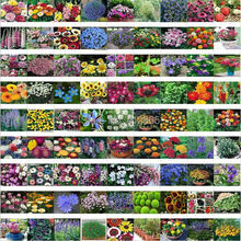 mixed 150 seeds/pack Spring and autumn of the four seasons flower seeds the letoff bundle bag flower seeds