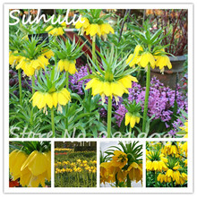Rare Yellow Imperial Crown Seeds 50seeds/bag Beautiful Fritillaria imperialis Lutea Seeds Diy Home Garden Planting Easy Grow