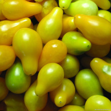 Yellow Green Cherry Peach Pear Tomato Seeds Organic Tomato Seeds Heirloom Tomato 400 Particles/Pack(China)
