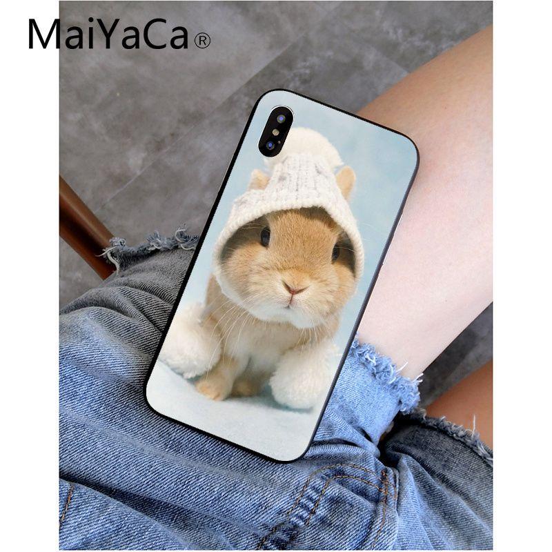 cute animal bunny rabbit