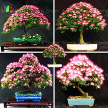 10 pieces bonsai  Albizia Flower  seeds called Mimosa  Silk Tree ,seeds  for flower potted plants free shipping ornamental-plant