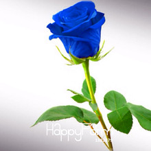 New Seeds 2017!Blue Rose Fragrant Gardens Flowering Plants Strong, Blue Dragon rose, Blue Rose Seeds 150 PCS/Bag,#6UTXC7(China)