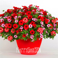 Big Sale!Park Glamorous Girl Mixed Garden Petunia Seeds,100 Seed/Lot,Lipstick Candy Hearts and Feminine Beauty,#0P8SG7
