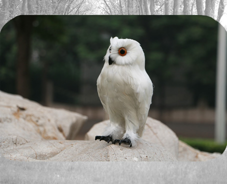 about 30cm simulation white night owl toy lifelike model garden decoration gift t035<br>