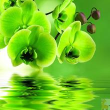 green Phalaenopsis Orchid Cross Stitch diy 5D Full diamond embroidery Diamond painting decor Wall Sticker crystal mosaic