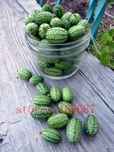 100 pcs finger watermelon seeds ,mini watermelon rare delicious fruit tree for home garden planting no-gmo