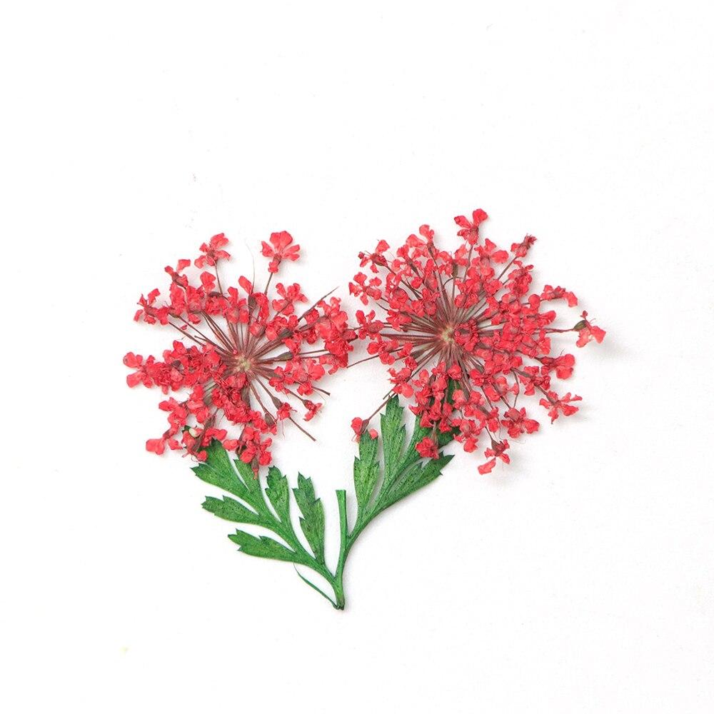 Dried Flower5
