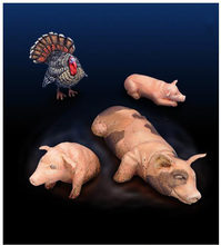Unpainted Kit 1/35 animal pigs and turkey    figure Historical WWII Figure Resin  Kit Free Shipping