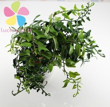 Approx 24cm Green Simulation plant artificial flower potted Fern plants For decoration Home Party Wedding 1pc/lot 027034026