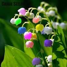 50 Pcs Lily Of The Valley Flower Seeds Indoor Rare Bell Orchid Seeds Rich Aroma Bonsai Flowers Seed Cute And Beautiful Plants