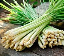 400 Lemon Grass Seeds Herb Edible Lemongrass Kitchen Vegetable seeds Medicinal Use(China)