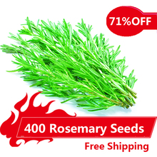 400 Rosemary Seeds DIY Garden Plant Easy To Grow Herb, vegetable seeds healthy,(China)