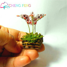 100 Pcs Mini Bonsai Orchid Seeds Indoor Home Miniature Flower Plants Pot seed Garden Diy plant Sementes 2016 Rare Flowers Gift
