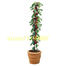20 pcs cherry seeds fruit cherry mini bonsai draft tree no-gmo Big and sweet easy grow fast growing free shipping(China)