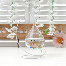 Transparent Glass Vase Creative Home Furnishing Decorations Hanging Aquarium Flower Living Room Decoration Glass Vase Wholesale