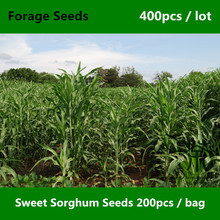 Prompt Shipment Milo Sweet Sorghum Seeds 400pcs, Extra Gift Jowari Durra Chinese Sorghum Forage, Good Packaging Sorghum Bicolor(China)