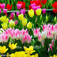 Bonsai tulip Seeds 100pcs 10kinds mix Flower Seeds Novel Plant for Garden Free Shipping