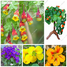 Bonsai Tropaeolum Majus Dry Lotus Flower Seeds Water Lily Pad Potted Plant Garden Decoration Plant Nasturtium 5 Particles / Bag(China)