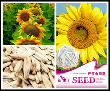 Sunflower Seeds big white toothpick sunflower food flower seeds Garden plant Original Professional Packing 20 particles Seed