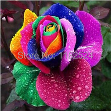 100pcs China Rare Rainbow Rose Seeds La Rosa Semillas Gift Easy to Plant Garden Planting