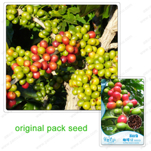 10 Seeds/Pack,China Yunnan adzuki bean coffee seeds,green coffee beans diet raw food diet tea
