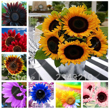 20 pcs Sunflower Seeds Giant Sun Flower Rare Bonsai Seeds For Home Garden Planting Sunflower Flower Pots Planters