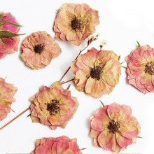 100pcs Pressed Dried Light Pink Rose Flower Plants Herbarium For Jewelry Postcard Phone Case Photo Frame Craft DIY Making(China)