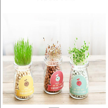1set Creative DIY Anion Hydroponic Potted Miniature Office Desktop Mini-landscape Plant Radiation Home Decoration Accessories