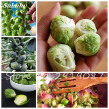 80 Pcs Spores Cabbage Seeds Chinese Organic Vegetable For Garden Orchard Bonsai Plant Good Taste Nutritious Delicious Food(China)