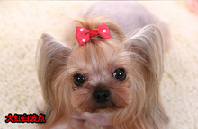 Lovely Pets Hair Bow Headdress Puppy Cat Teddy Hairpin Accessories Xmas Halloween Cosplay Hair Decorations for Pet