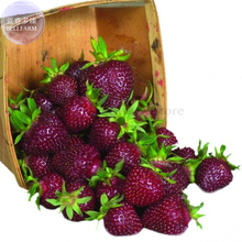 Heirloom Purple Wonder Strawberry Seeds, 100 seeds, professional pack, Non-gmo extra sweet berries TS374T