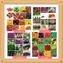 700PC World's Most Complete Four Kinds of Vegetables and Fruit Seeds. (RADISH, EGGPLANT, PEPPERS, TOMATO SEEDS) Colorful Garden