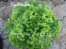 300seeds/bag Giant America Fast growing Lettuce seeds high nutritious delicious vegetable seeds low maintance, healthy Non Gmo(China)