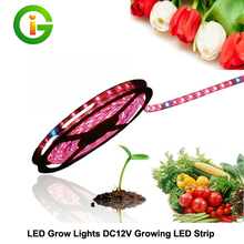 LED Grow Lights DC12V Growing LED Strip IP20 IP65 IP68 Plant Growth Light for Greenhouse Hydroponic plant