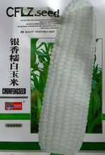 1 Orginal Packing Seeds, 30g around 50 pcs White Corn Seeds, Garden Bonsai Plant Free Shipping