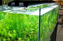 "odyssea 4 tubes T5HO lighting with leds, 24"" 60cm Quad Aquarium Lighting 4X24W 6500k for plant aquarium"