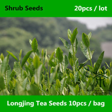 Very Popular West Lake Longjing Tea Seeds 20pcs, China Famous Dragon Well Tea Shrub Seeds, Widely Cultivated Long Jing Cha Seeds(China)