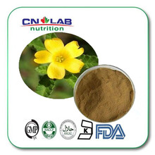 high quality 100% Natural Damiana P.E. 10:1(China)
