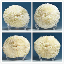 Small boutique Coral mushroom coral daisy flower umbrella radiation degaussing king fish tank aquarium landscaping(China)