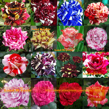 16 Kinds Mixed 100 Rose Seeds/Pack, Four Seasons Sowing The Seeds Of Perennial Flowers, Rose Flowers Seeds Easy To Plant