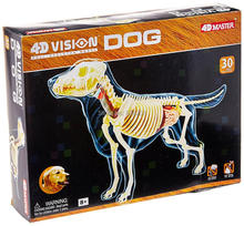 4D Master vision Golden hair dog ANATOMY MODEL full skeleton anatomical model Fully Detachable Organs Body Parts Educational
