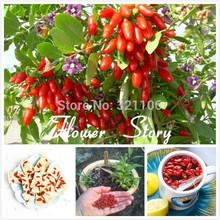 100 Himalayan Goji Berry seeds, (wolfberry ), most popular heathy berry , dwarf bush rich in Antioxidant free shipping(China)