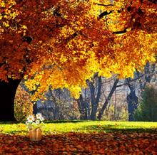 LIFE MAGIC BOX Backdrop Photo Studio Photographic Backgrounds Yellow Trees Picnic Cm15-S-401(China)