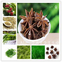 Sale! 100pcs/bag  Rare Illicium Verum Star Aniseed Chinese Star Anise Seeds Vegetables Interest Outdoor Garden Tree Seed Plants