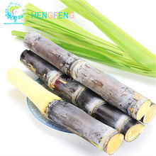 100pcs China Sugar Cane Seeds Vegetable And Fruits Seed Outdoor Bonsai Plants Easy To Grow For Home & Garden Diy Plant Semente