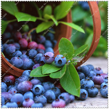 200pcs/bag Blueberry fruit Seeds Grow Your Own attractive impressive Fast growing,bonsai plant home garden(China)