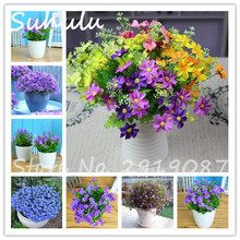 Rare China Campanula seeds 50 Pcs Perennial Beautiful Flowers Indoor Tree Bonsai Potted Plants Light Up Your Home Garden Mixed