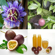Exotic Passion Fruit Seeds Purple Passiflora edulis Passion Flower Outdoor plant - 10pcs/lot(China)